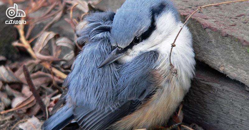 درمان کمبود کلسیم در پرندگان