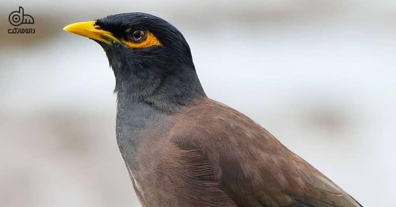 تفاوت پرنده زینتی و پرنده خانگی