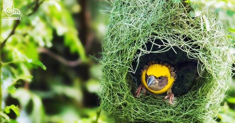 لانه سازی پرندگان